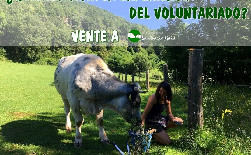 voluntarido