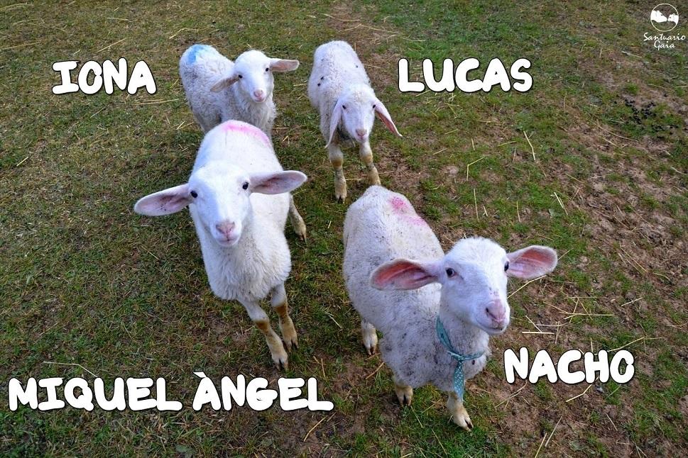 IonaLucasNachoMiquelAngel