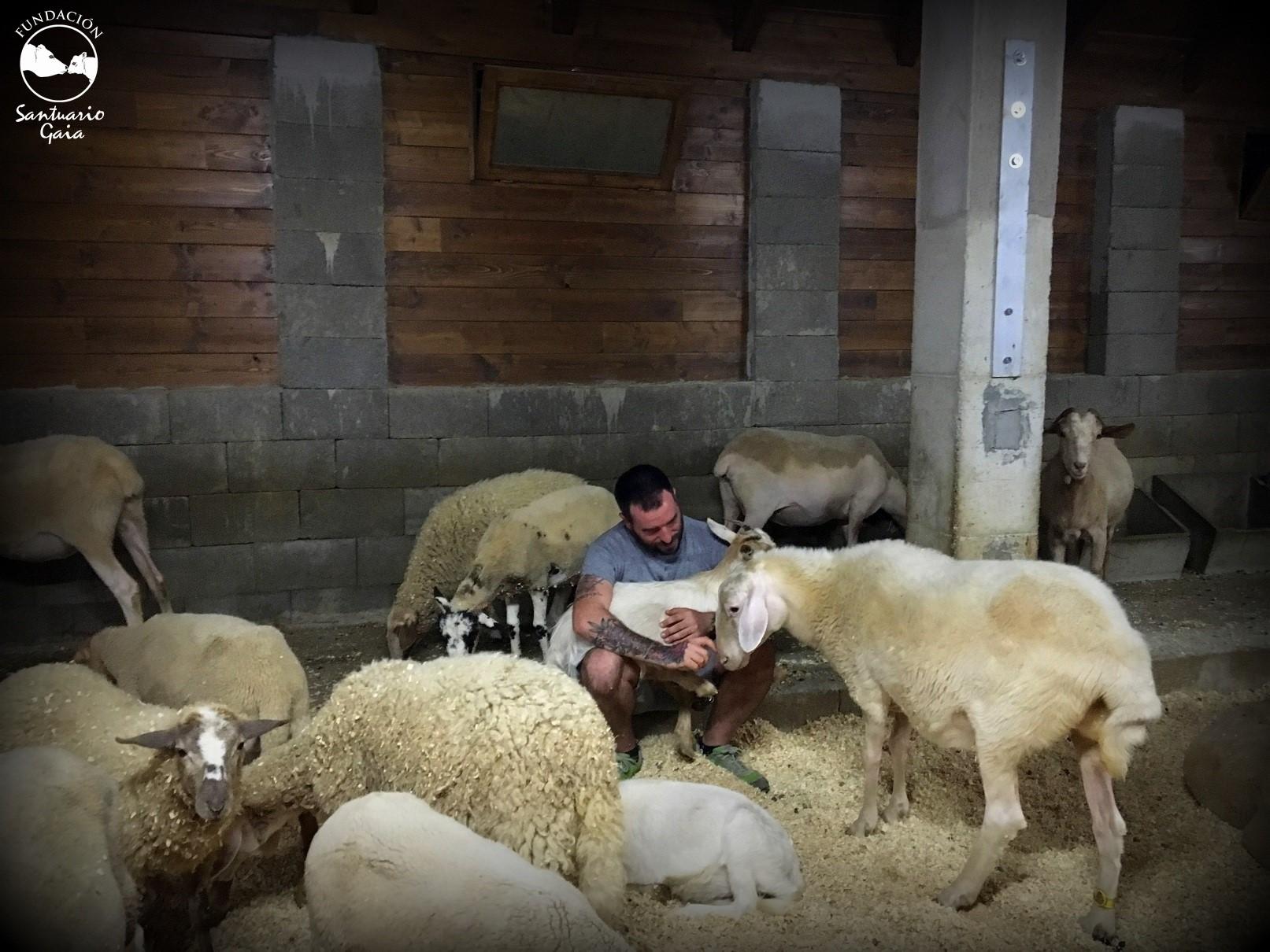 lia ismael ovejas