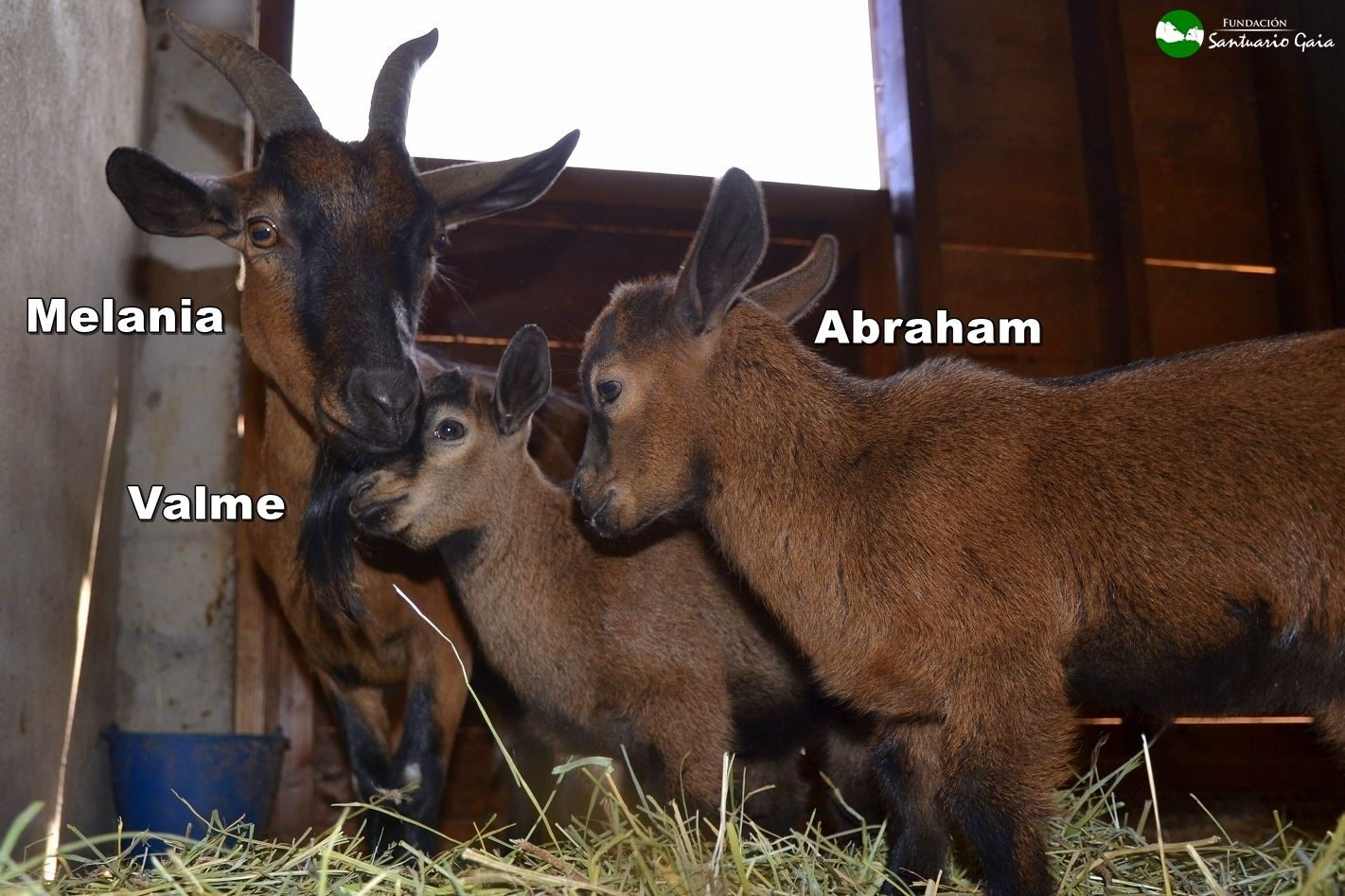 Melania Valme Abraham