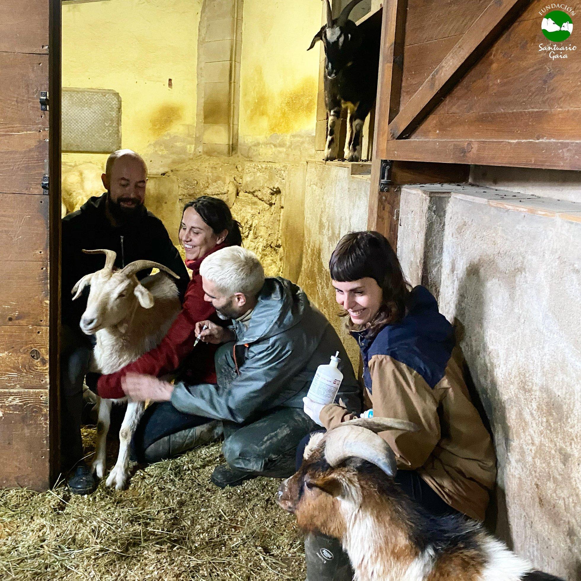 desparasitar, ovejas, cabras