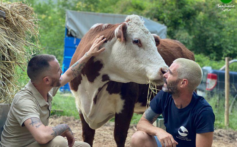 vacas alsasua navarra