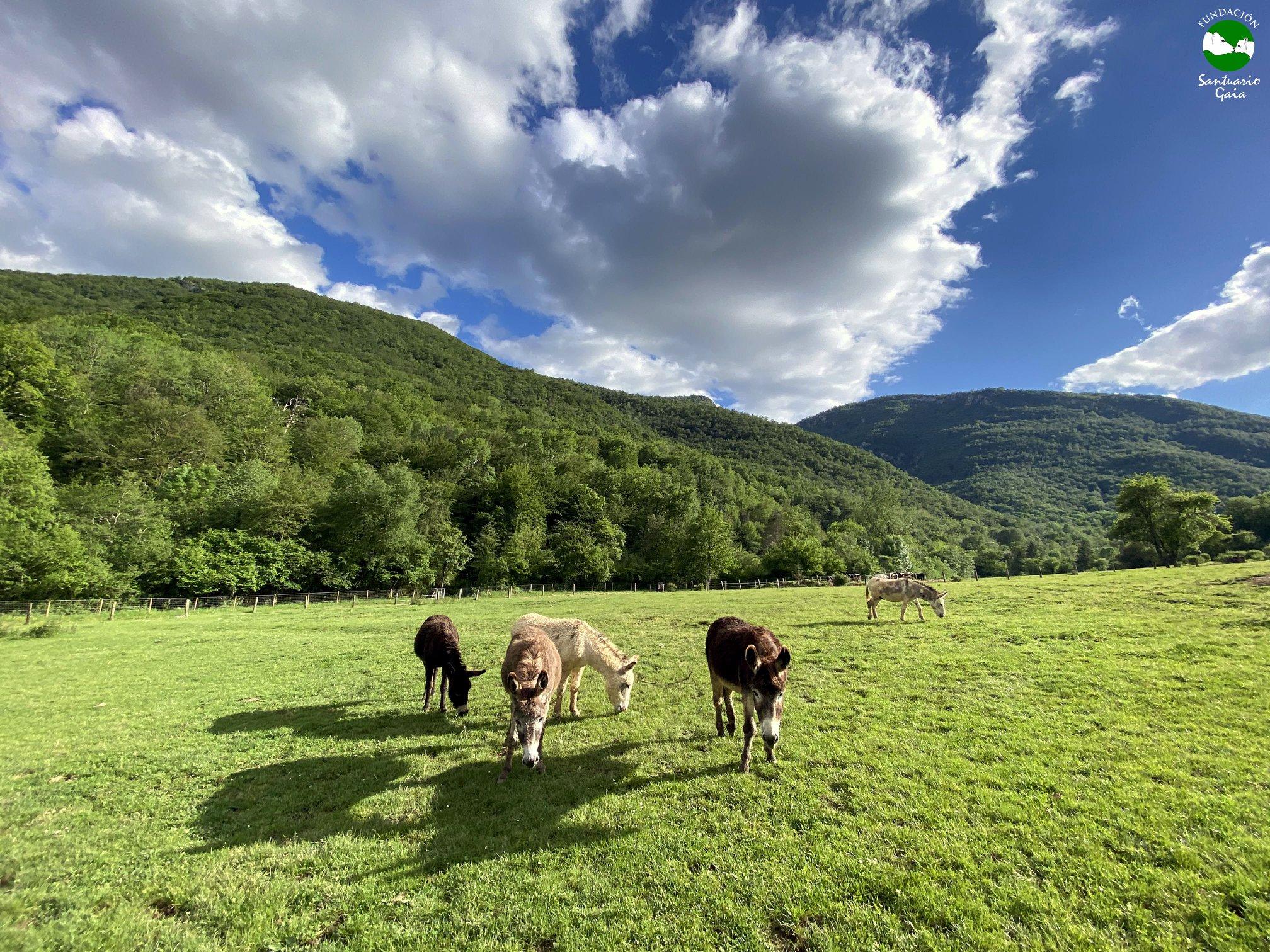 burros_mayo2020