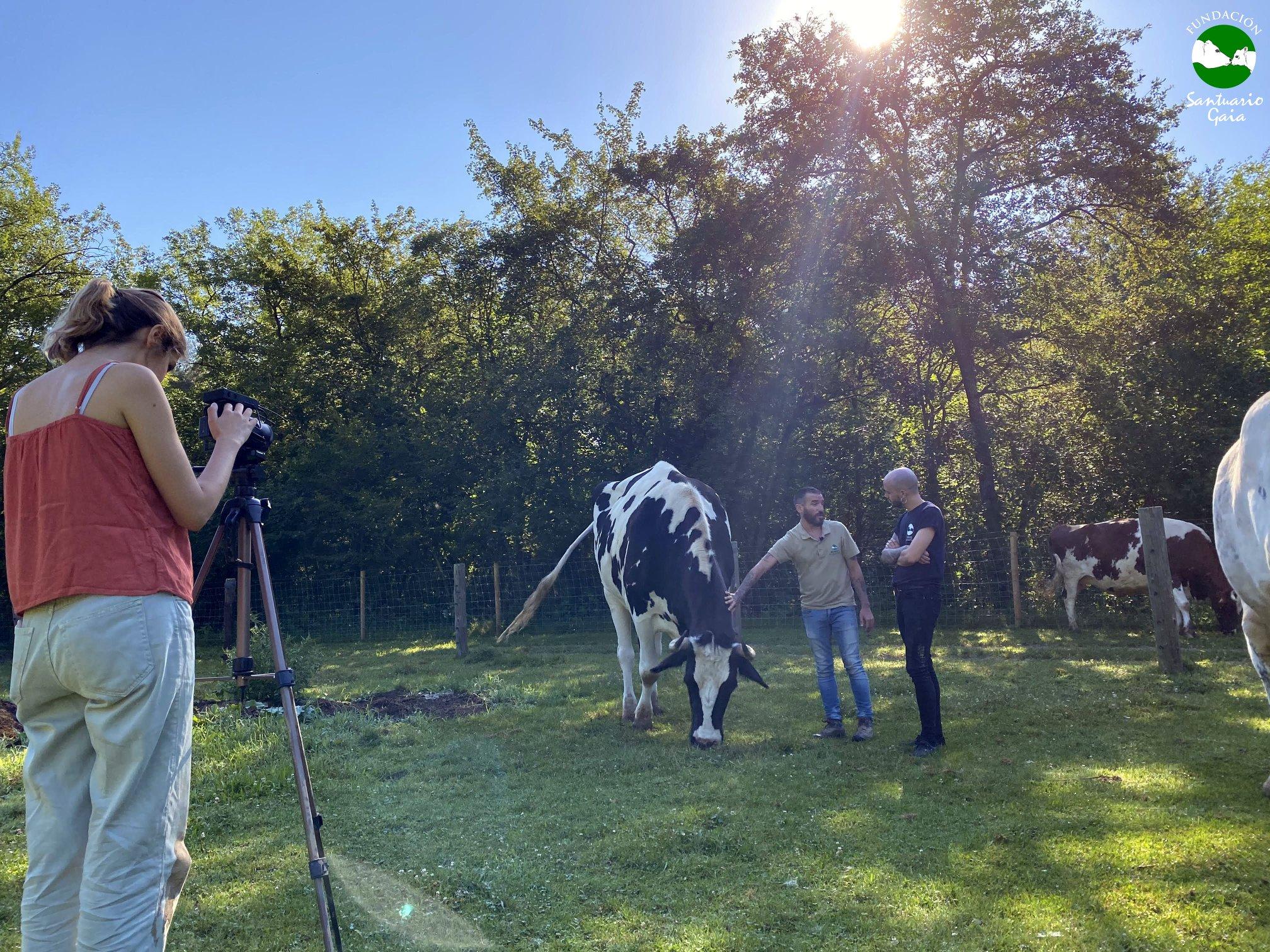 entrevista animales de granja