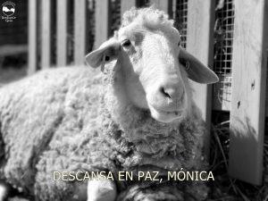 MONICA RIP 1