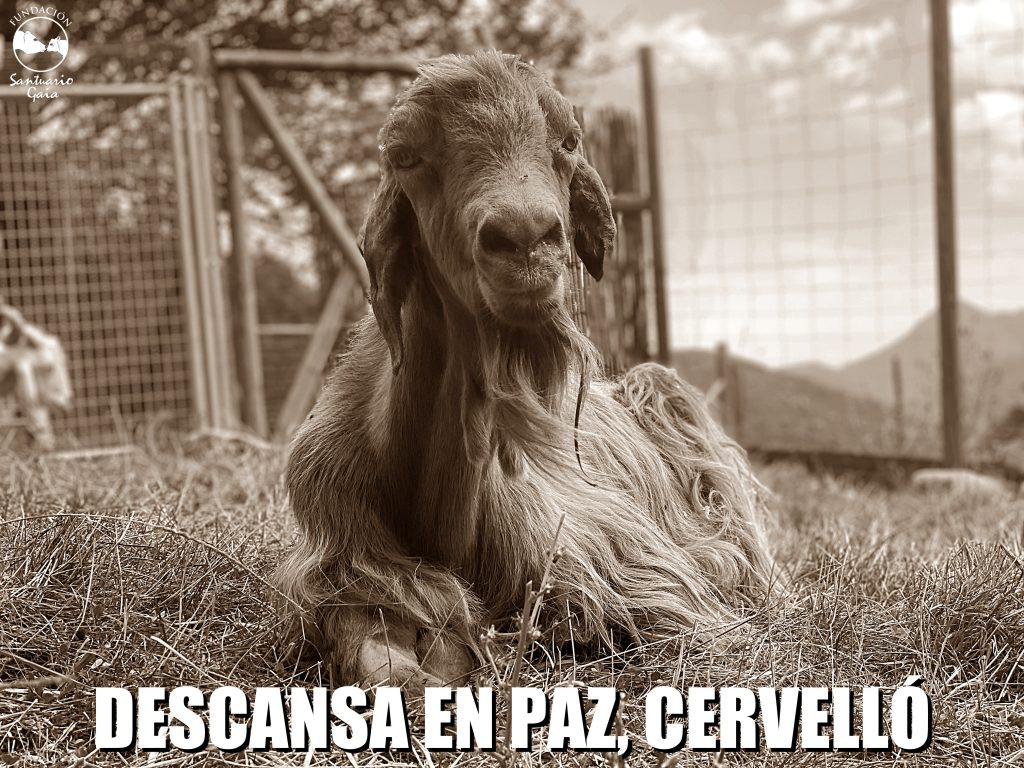 RIP CErVELLÓ