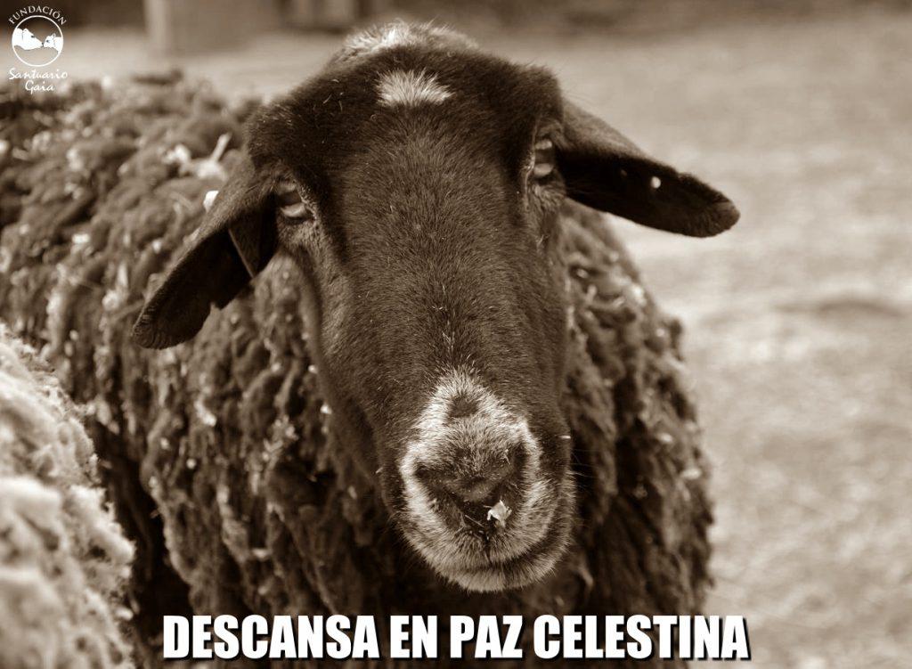 celestina rip1